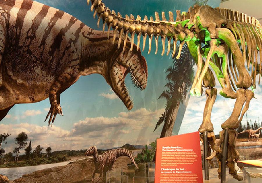 5_dinozaury