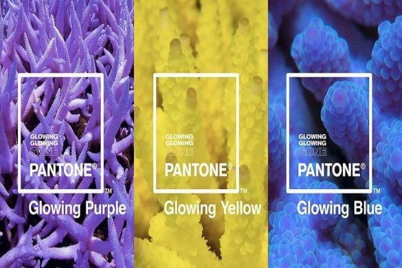 pqleta pantone glowing